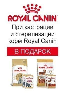 При кастрации корм Royal Canin в подарок