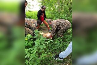 Косуля, которая заблудилась во дворах Эльмаша, умерла в ветклинике при осмотре