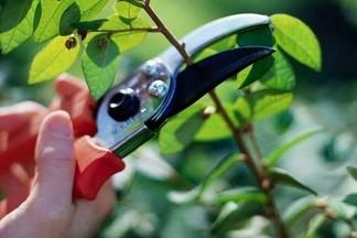На территории района завершаются работы по обрезке зеленых насаждений