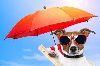 В каком случае шесть детей, две собаки, четверо взрослых, забравшись под один зонтик, не намокнут?