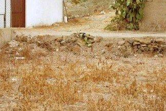 Найдите кота на фото