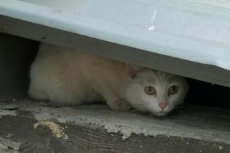 Найдена белая кошка (Екатеринбург, Эльмаш)