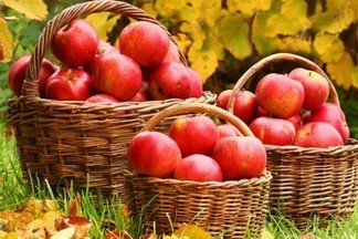 Как поделить их между пятью детьми так, чтобы одно яблоко осталось в корзинке?