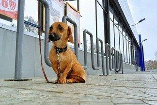 Почему нельзя оставлять привязанных собак у магазина