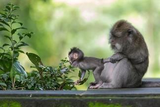 ЧУДЕСНЫЙ МИР: программа с дрессированными животными по спеццене