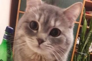 Пропал кот Боня