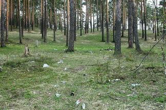 Волонтёры Екатеринбурга чистят леса от мусора и сажают новые