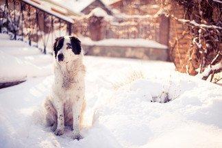 Лучший друг человека: готовы ли вы завести собаку?