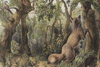 Найдите всех животных и все лица на этой картине