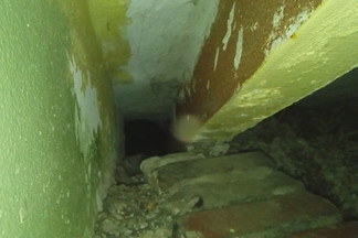 Он просидел там почти сутки: на Эльмаше спасли кота, застрявшего в проломе между стеной и лестницей