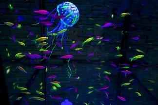 Магазин АКВАРИАЛЬ: зоотовары, аквариумы, рыбки