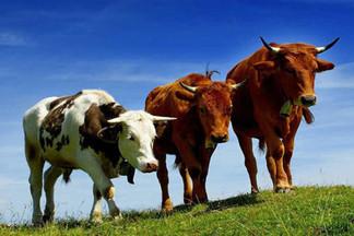 Внимание: районная станция по борьбе с болезнями животных проводит бесплатные обработки