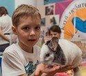 """Выставка декоративных домашних животных """"Хвостатая радуга 2016"""", фото № 31"""