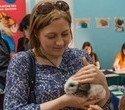"""Выставка декоративных домашних животных """"Хвостатая радуга 2016"""", фото № 60"""