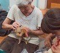 """Выставка декоративных домашних животных """"Хвостатая радуга 2016"""", фото № 29"""