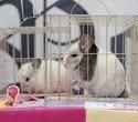 """Выставка декоративных домашних животных """"Хвостатая радуга 2016"""", фото № 25"""