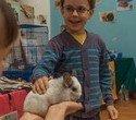 """Выставка декоративных домашних животных """"Хвостатая радуга 2016"""", фото № 41"""