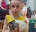 """Выставка декоративных домашних животных """"Хвостатая радуга 2016"""", фото № 14"""