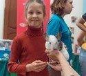 """Выставка декоративных домашних животных """"Хвостатая радуга 2016"""", фото № 19"""