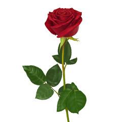 Магазин цветов Магазин цветов Цветы на Бульваре Роза