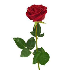 Магазин цветов Цветы на Бульваре Роза - фото 1